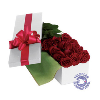 [only호주]Roses For You