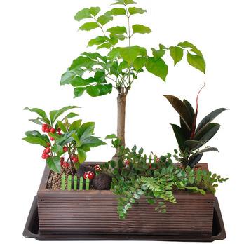 녹보수-요정의 정원