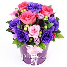비누꽃大 사랑향기