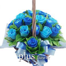 비누꽃-최고의사랑-블루